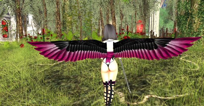 Wings_006
