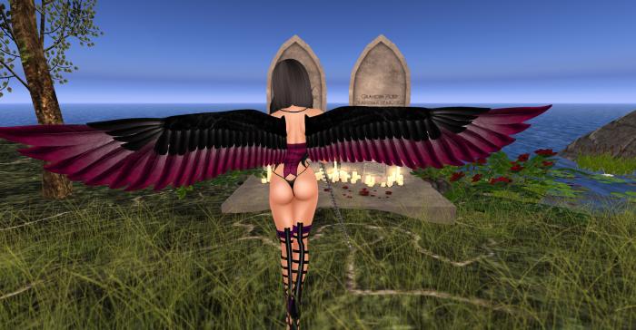 Wings_017